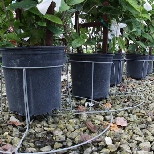 Wire plant stabilizer nursery plant stabilizer basket better bilt products - Gallon bucket garden container ...